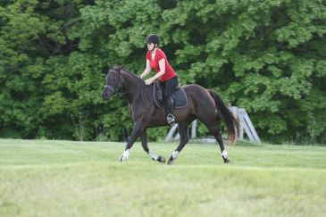 Twinkle is also a Foundation Quarter Horse, and displays the muscular hindquarters beautifully.