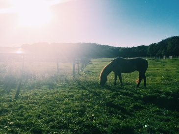 Early fall afternoon at the farm.